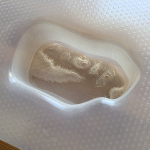 3.7 oz T-Rex Head Plastic Mold