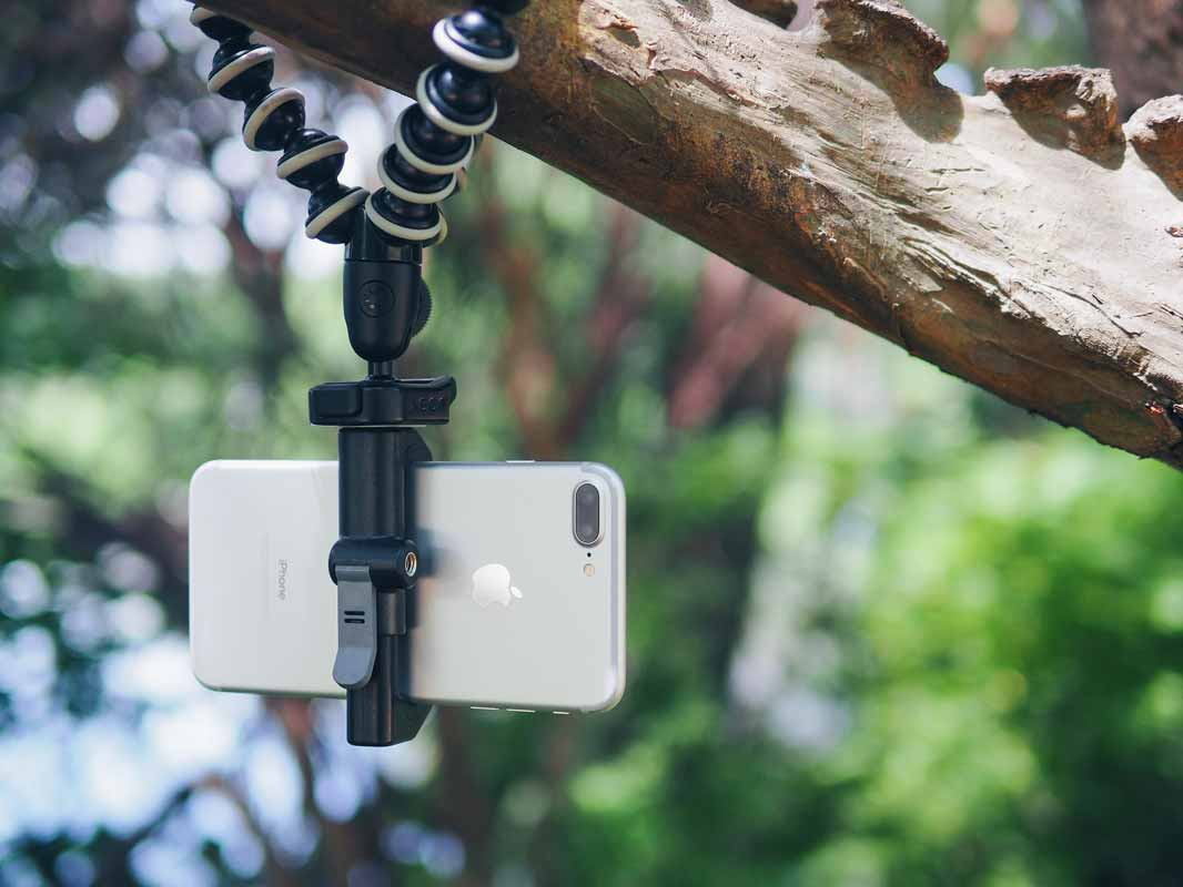 a phone being held upside-down by the Glif while hanging from a tree.