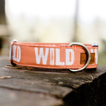 Monarch WILD Collar