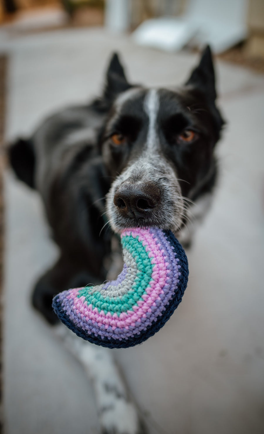 Good Vibes Moon Dog Toy