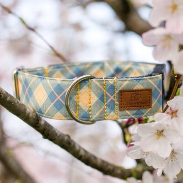 Daffodil Plaid Collar