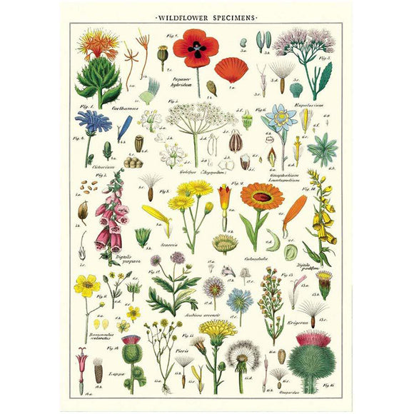 Cavallini Flat Wrap - Wildflowers