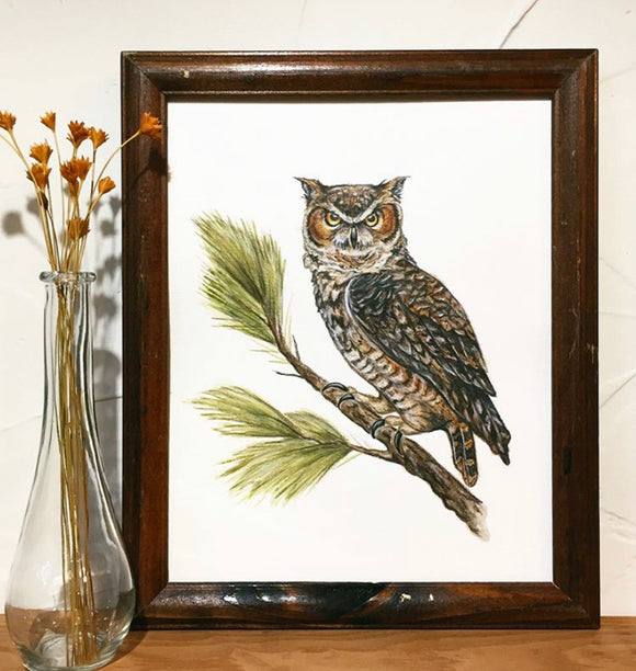 Horned Owl 11x14 Art Print