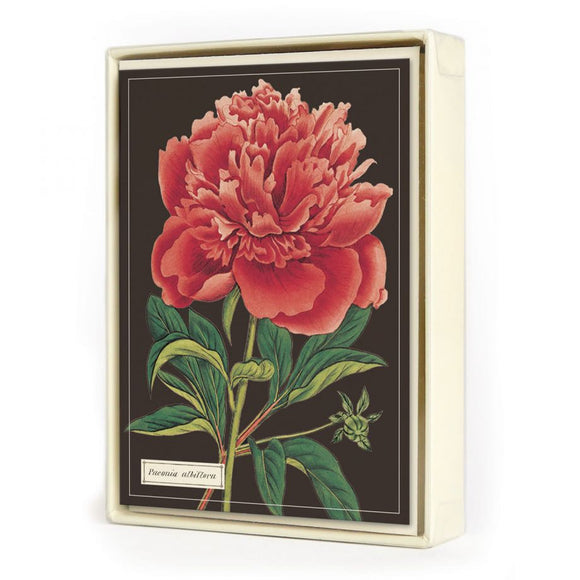 Botanica Assorted Note Cards (Set of 8)