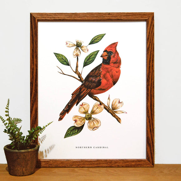 Cardinal and Dogwood 11x14 Print