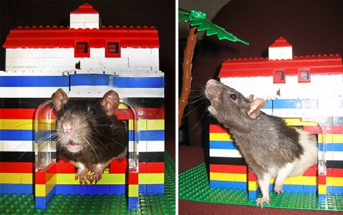 lego house for pet idea laminifigs