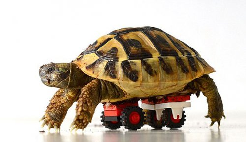 Lego wheelchair for a turtle