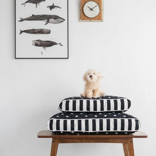 MDG Essential - Stars & Stripes Pet Cushion