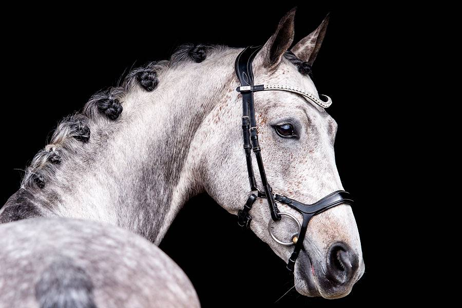 PS of Sweden Pioneer Bridle