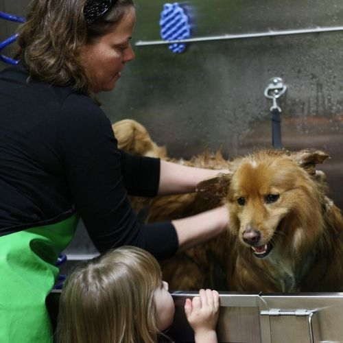 family washing dog