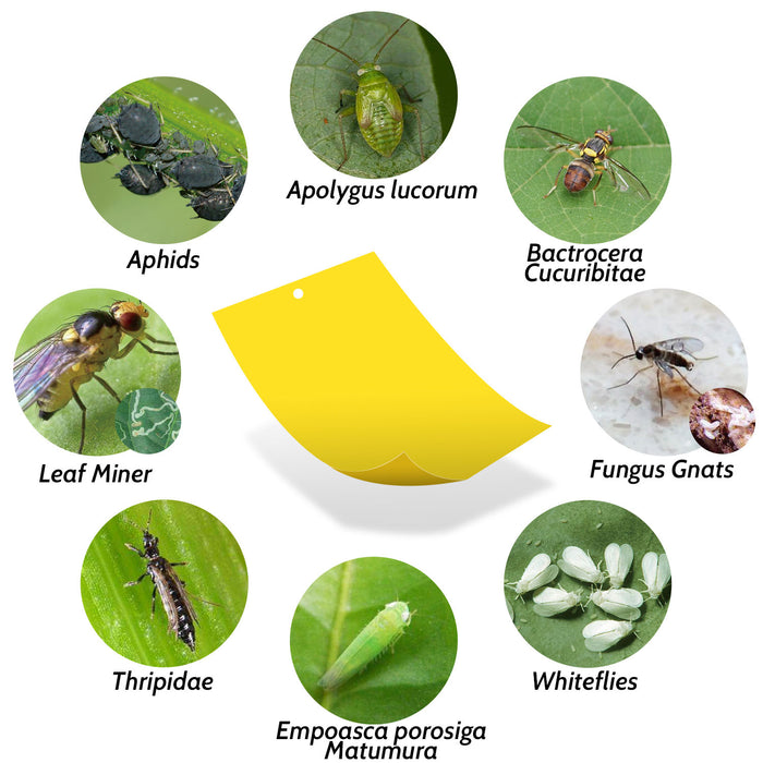 Kensizer 30-Pack Dual-Sided Yellow Sticky Traps for Flying Plant Insect  Like Fungus Gnats, Whiteflies, Aphids, Leaf miners,Thrips & more