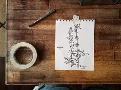 Hand Drawn Foxglove Illustration