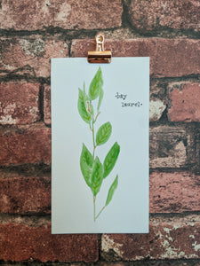 Bay Laurel Watercolor Card
