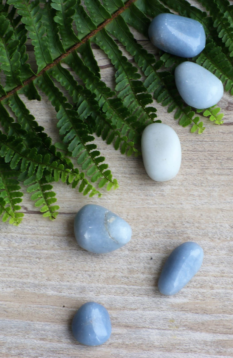 Angelite Tumbled Stone (Pack of 6)
