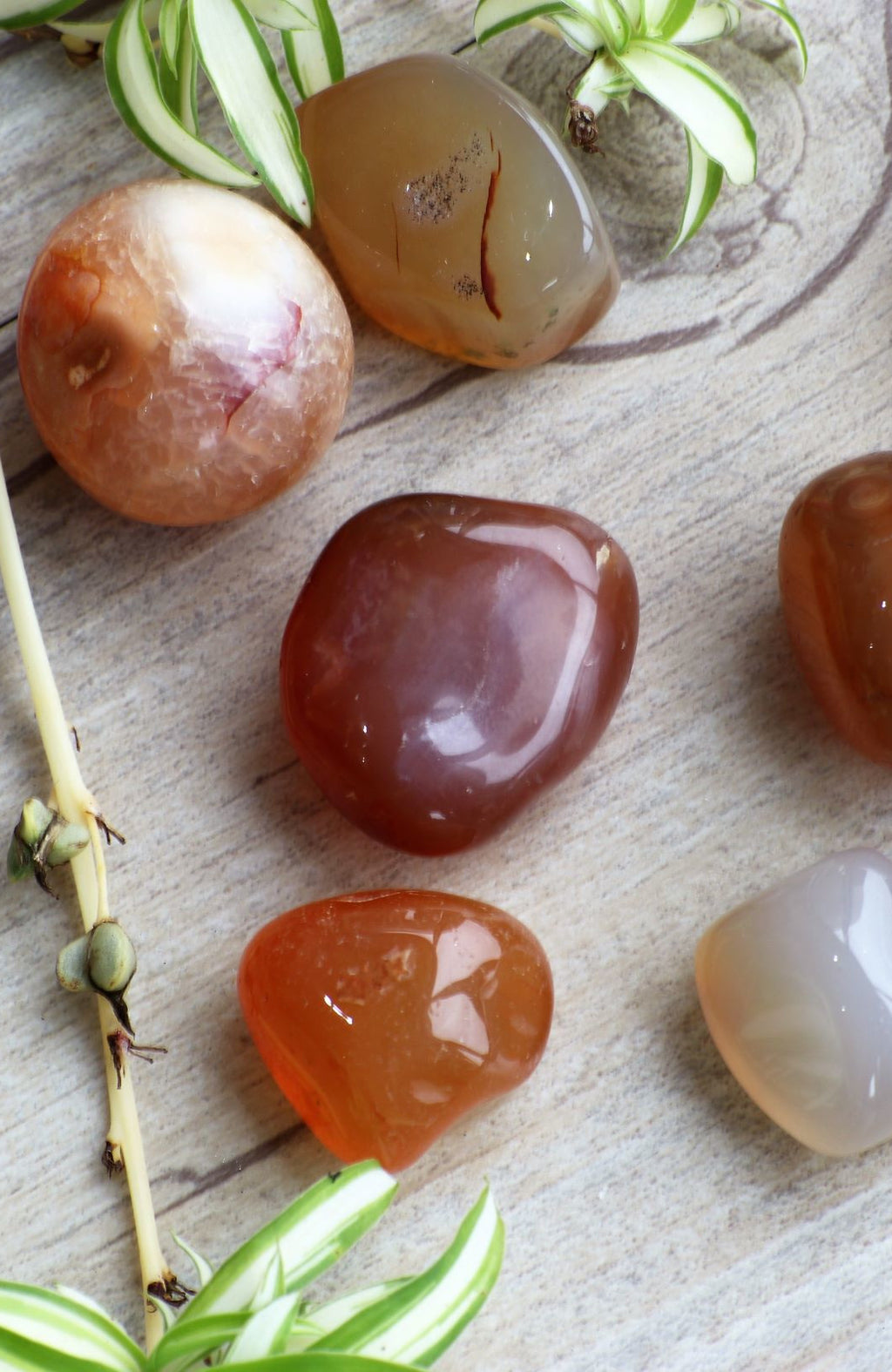 Carnelian Tumbled Stone (Pack of 6)