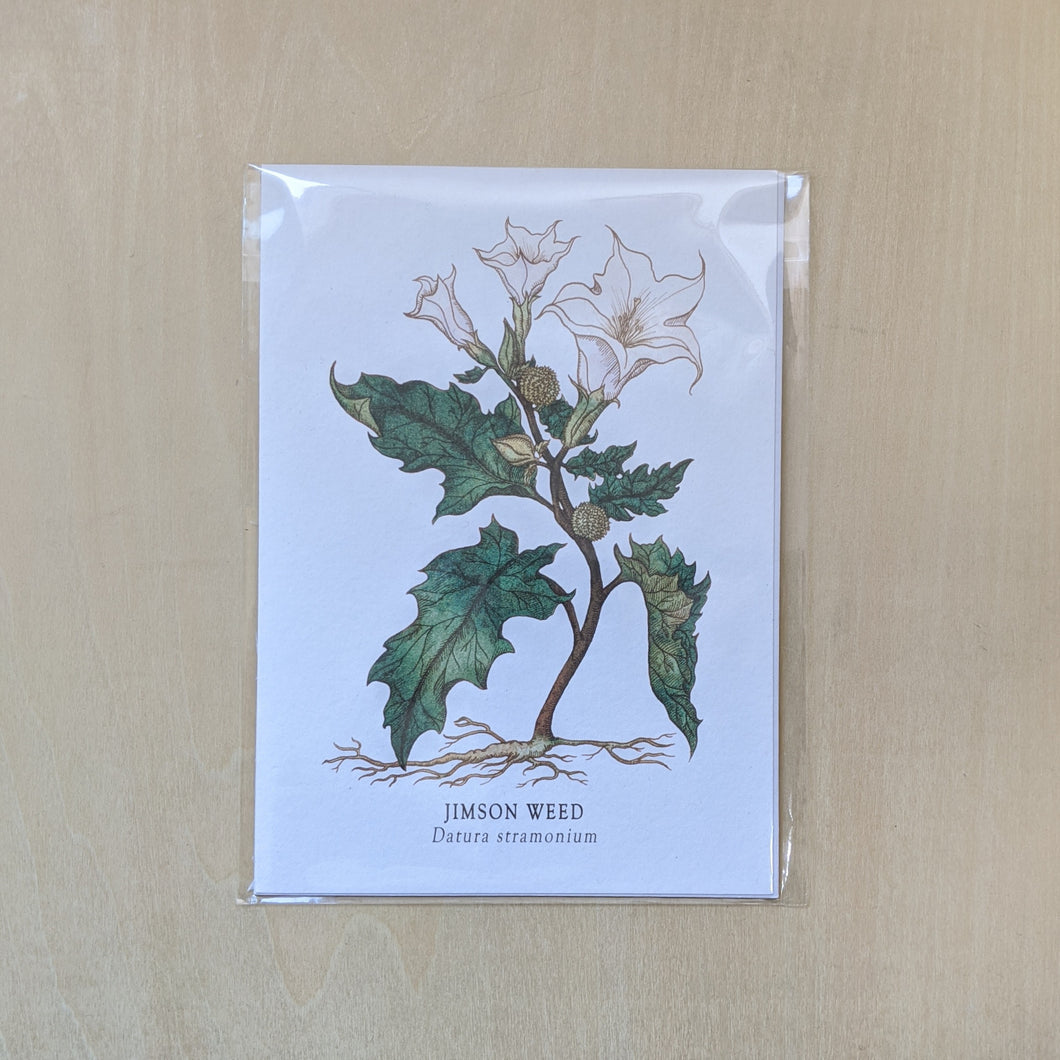 Illustration of a datura plant, wrapped in shiny cellophane sleeve.