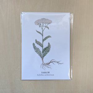 Illustration of a yarrow plant, wrapped in shiny cellophane sleeve.