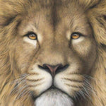 2019 5d Full Diamond Painting Kits Style Lion  QB5862