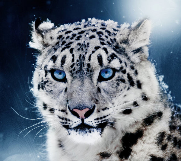5d Diy Diamond Painting Kits Black White Leopard VM8064
