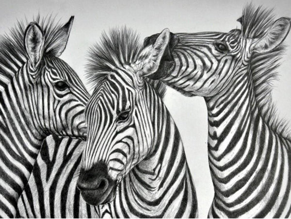5D Diy Diamond Painting Kits Black White Zebra NA00373