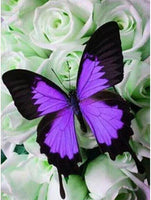 5D DIY Diamond Painting Kits Embroidery Cross Stitch Butterfly Flower VM90576