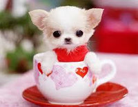5D Diy Diamond Painting Kits Cross Stitch Cute Dog In The Cup VM90828
