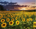 For Beginners Plant Sunflower 5D Diy Diamond Painting Kits NA0058