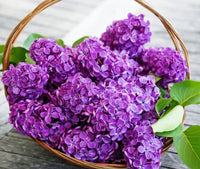 2019 5d Diy Diamond Painting Flower Kits Lavender VM3576 (1766999851098)