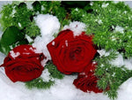 Cool Pretty Red Roses With Snow Diamond Painting Kits AF9368