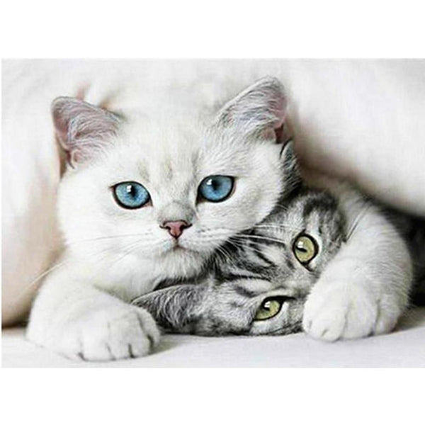 2019 5d Diy Diamond Painting Kits Two Cats VM0005 (1766914359386)