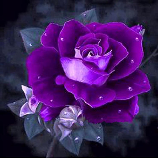 5D  Diy Diamond Painting Kits Purple Rose AF9308