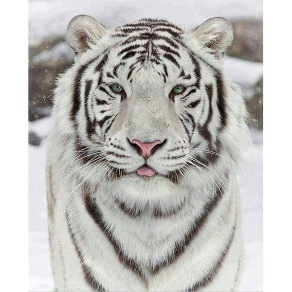 2019 5D DIY Diamond Painting Cross Stitch Kits White Tiger VM92088