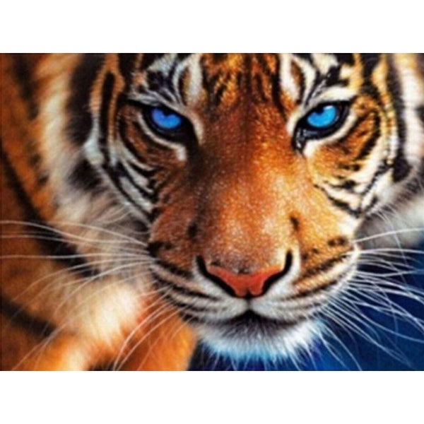 2019 5D Embroidery Diamond Blue Eyed Tiger  VM1142 (1766940639322)