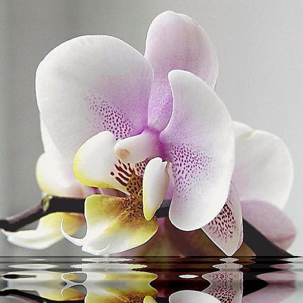 2019 5D DIY Diamond Painting Butterfly Orchid VM90032