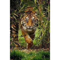 2019 5D Diy  Diamond Embroidery Kits New Jungle Tiger VM92175