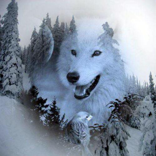 2019 5d Diy Paintings of Diamonds Winter White Wolf Portrait VM1961 (1766966198362)