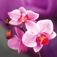 2019 5D DIY Diamond Painting Beautiful Orchid VM90014