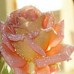 Cheap Pink Drill Rose 5d Diy Diamond Embroidery Kits VM4132
