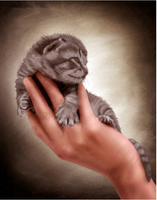 New Arrival Hot Sale Cute Cat In Hand 5d Diy Diamond Painting Kits VM7447