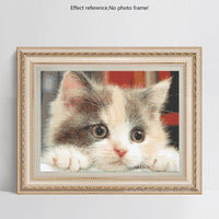 2019 Cute Cat 5D Square Diamond Painting VM1126 (1766939492442)