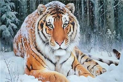 2019 5d DIY Diamond Painting Kits Winter Popular Tiger  VM8196