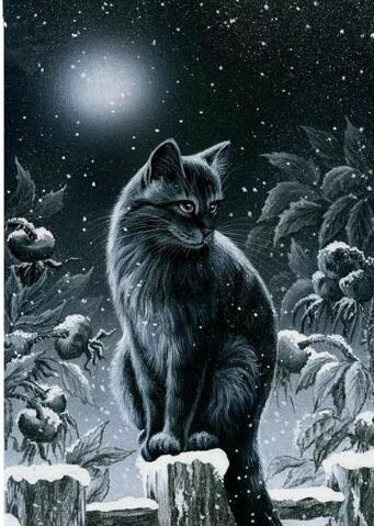 2019 5d Diy Diamond Painting Kits Black Cat In Snow VM7349
