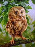5D DIY Diamond Painting Owl Kits Cartoon Animal  VM90588