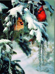 2019 5d Diy Diamond Painting Kits Winter Art Snow Bird VM8569