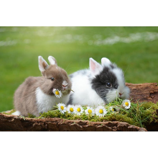 5D Diy Rabbits Diamond Embroidery Needlework Rhinestone Mosaic Kits VM88522