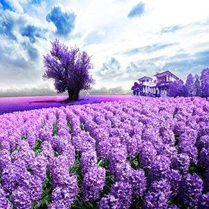 2019 5d Diamond Painting Kits Lavender Fields Picture VM8692