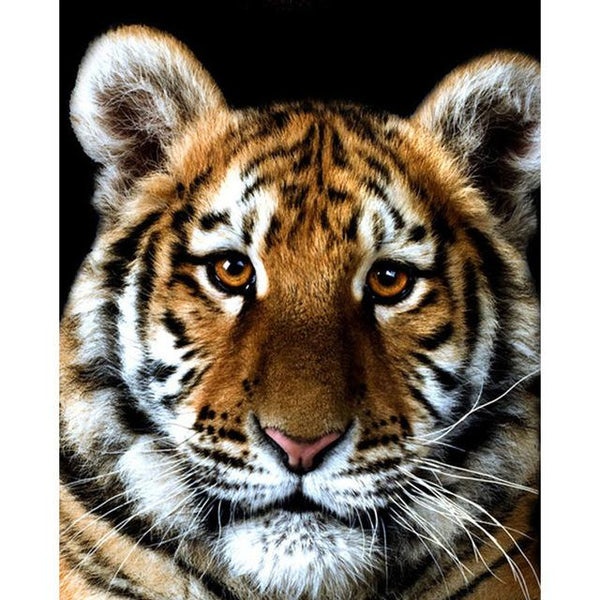 Cheap 2019 New Animal Portrait 5d Diy Diamond Painting Tiger VM1999