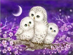 2019 5d Diy Diamond Painting Kits Owl Family VM8198