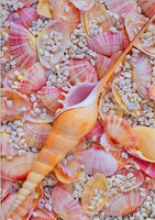 2019 5d Diy Diamond Painting Kits Summer Beach Starfish Shell Pebble VM07338