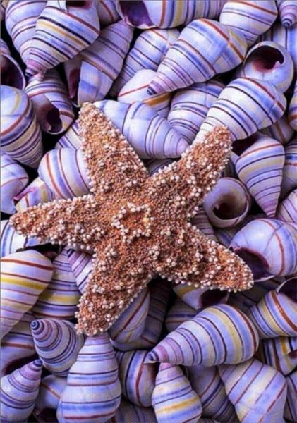 2019 5d Diy Diamond Painting Kits Summer Beach Starfish Shell Pebble  VM7330